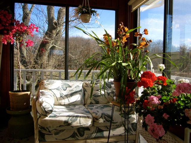 winter sunshine and flowers in sun room
