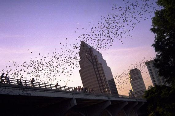 Don't miss the mexican free tail bats from the Congress Avenue Bridge  (May - October)