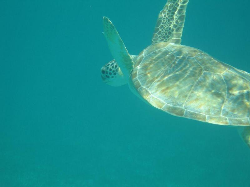 Coconut Beach Villa Turtles In Sapodilla Bay Just Outside The