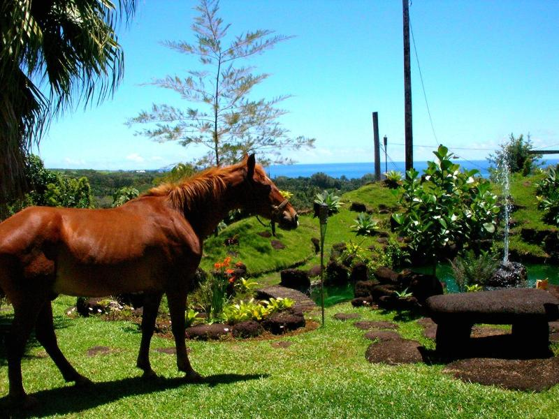 The Horse Grazing In The Front Yard