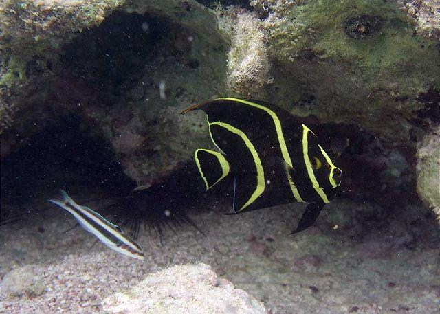 Half Moon Bay Reef