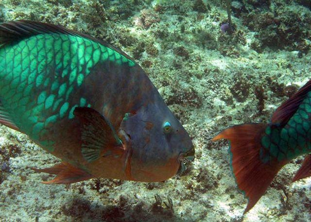Half Moon Bay Reef Akumal