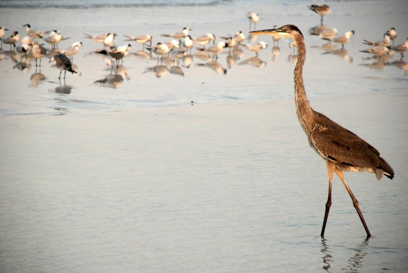 Birds get so close on the beach!