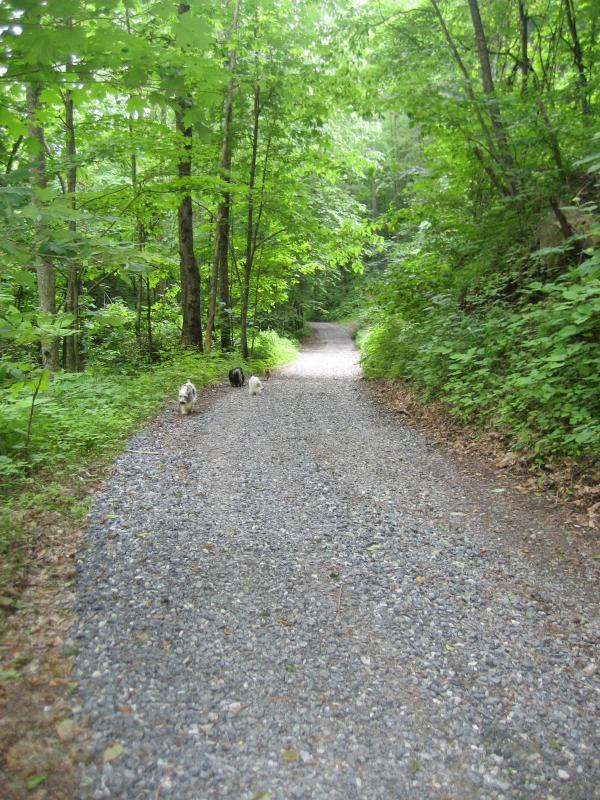 Wolf Branch Road mid May 2011