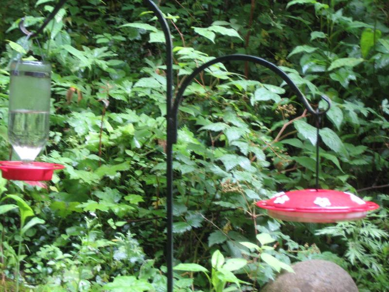 Hard to Capture- but 6 to 8 hummingbirds gather at the feeders at 1 time!