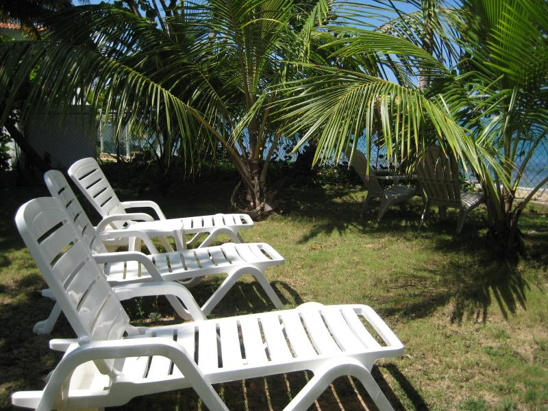 Lots of Lounge Chairs in our Garden
