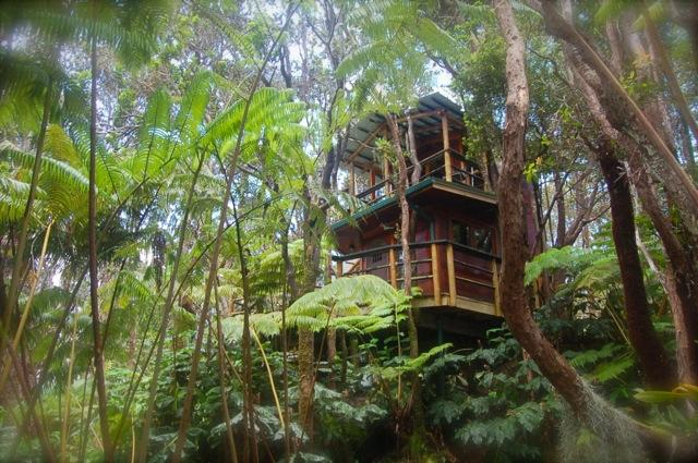 Treehouse in bos van hapu'you en ohia