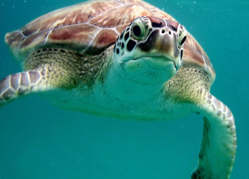 Snorkeling buddy