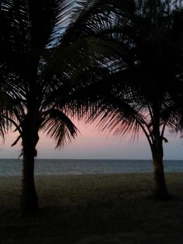 Palm trees at sunset - from our veranda
