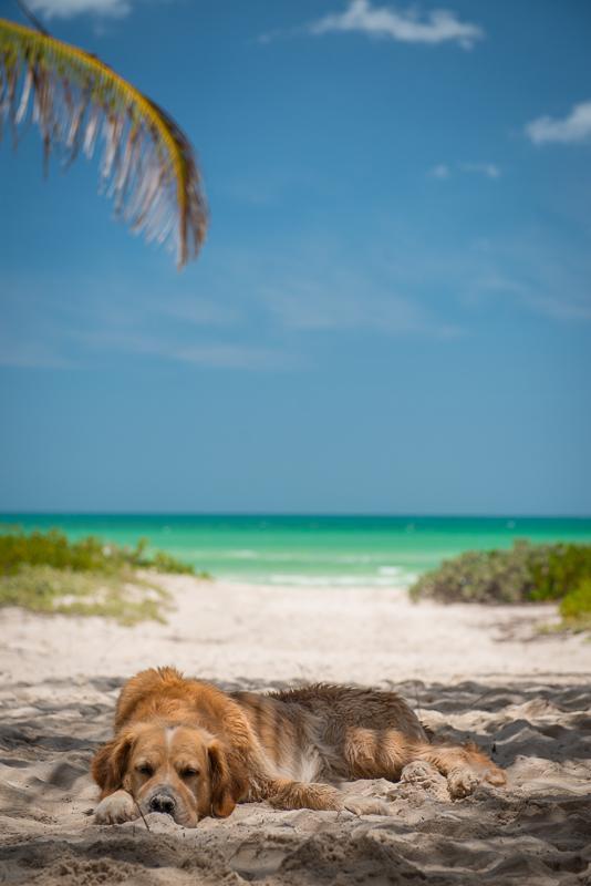 Beach Life in El Cuyo