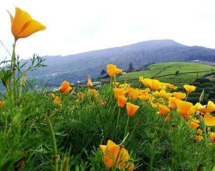 De prachtig uitzicht en rust maakt voorjaar Acre een uitstekende retraite