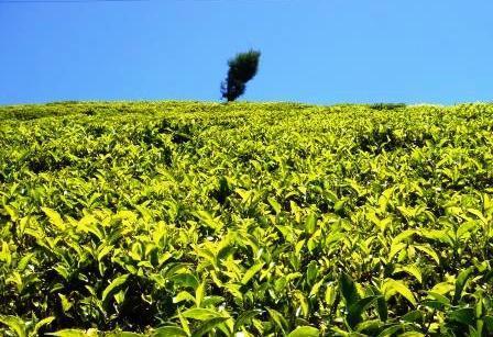 Weergave van de 'teascape' vanuit de bungalow