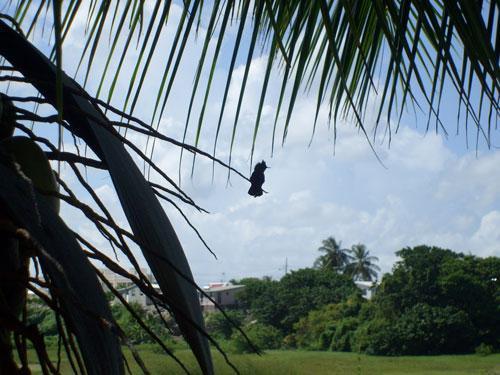 Our local Colibri (White Coconut Studio)