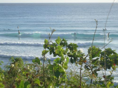 Surf for beginners - Freights the surf Spot