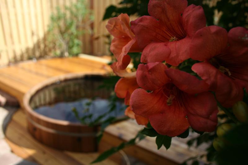 Trumpet Vine (August) and Cedar Tub