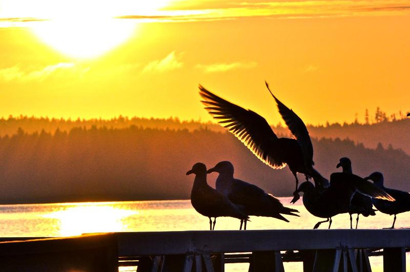 Spread you Wings~ Dream~Fantastic Condo~Awesome Sunrise