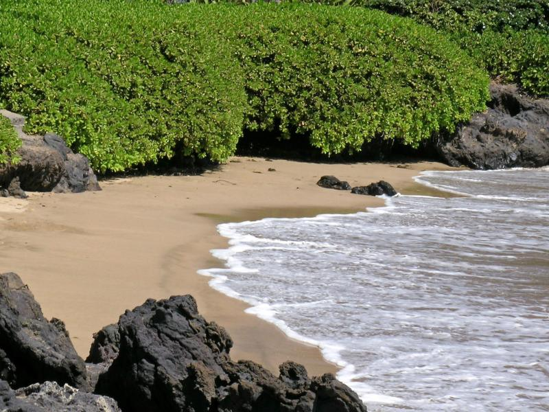 Great swimming on the beach in front of Wailele