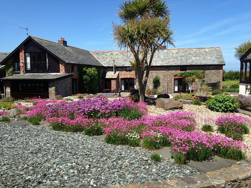 Thrift and Chives running riot in courtyard