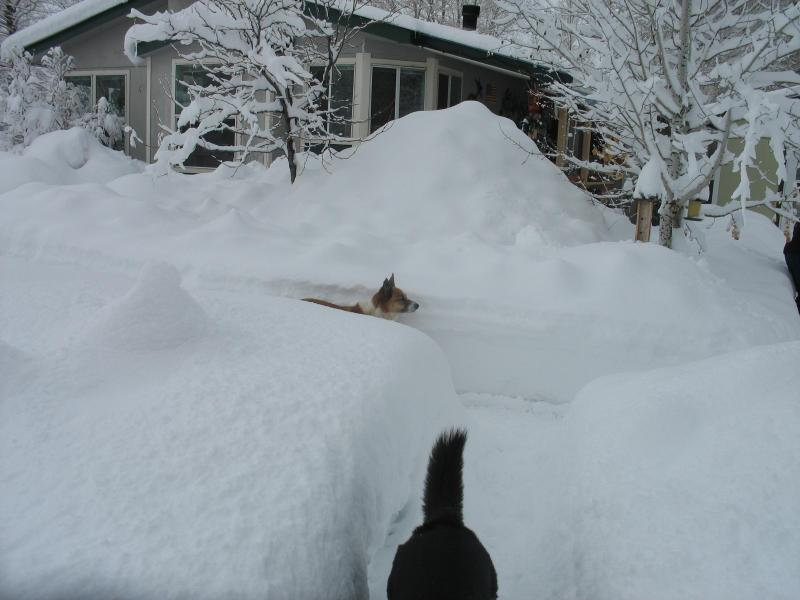 We are one hour from Durango in the other direction. Shiloh and JoJo demonstrate the depth of snow