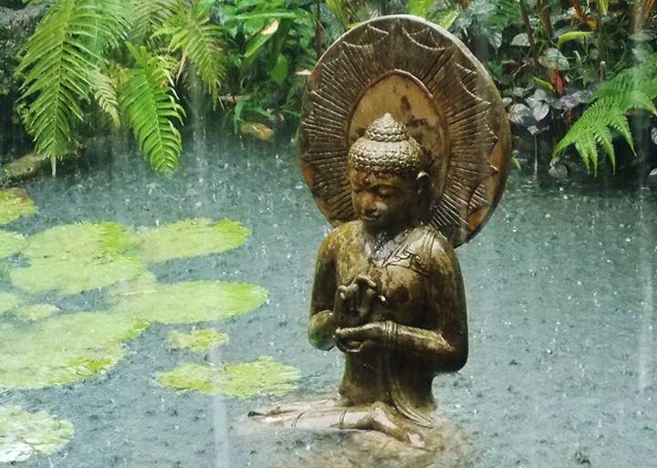 Buddha in the Rain