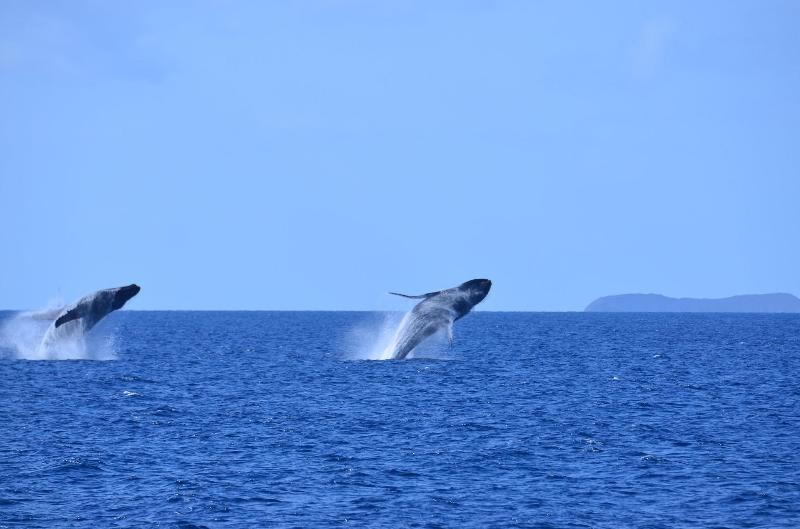 A rare double whale breach taken in March 2013 from our lanai by a guest (see review)