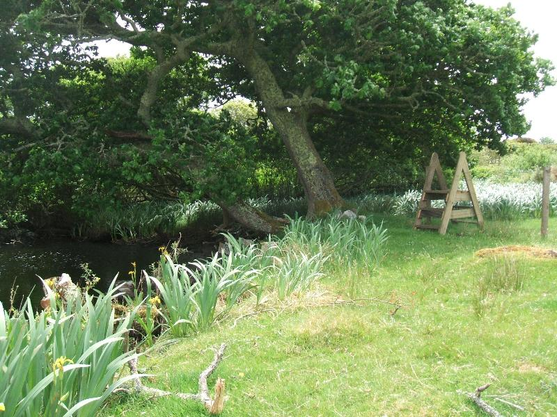 Oak Tree, Stile to fresh water river stocked with fish, trout , salmon .....