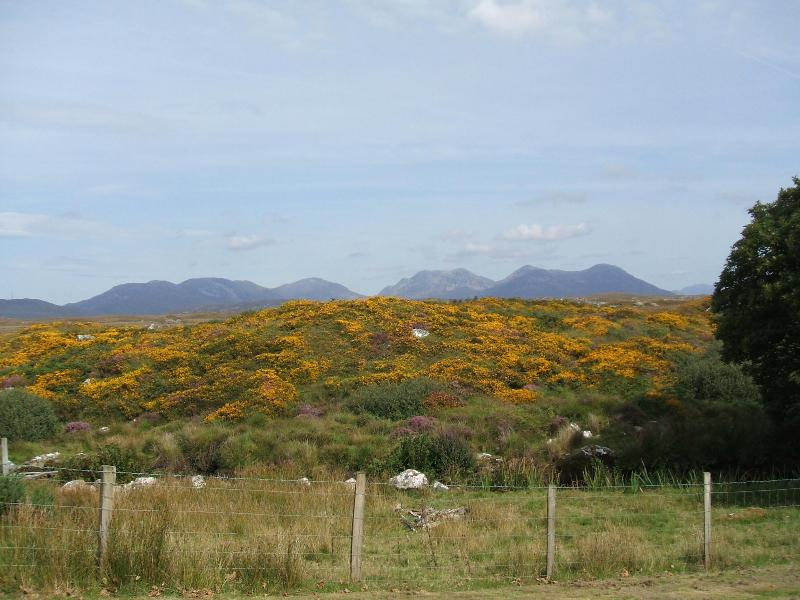 12 Bens and Gorse surrounding our cottage in full bloom.