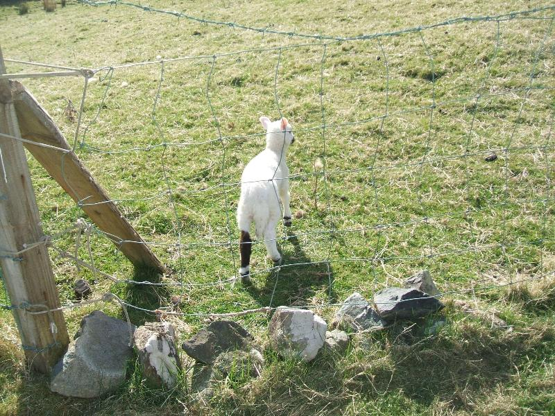 We named this little one  Easter.  It was only hours old at the time. Born in our garden !