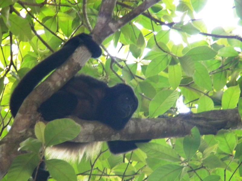 Wanna Monkey Around?