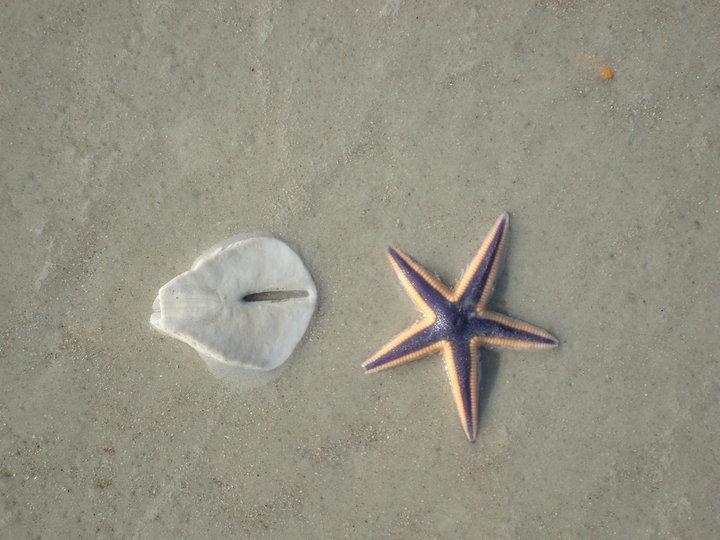 gifts from the sea ...
