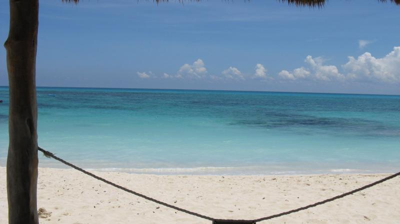 Beach palapa photo