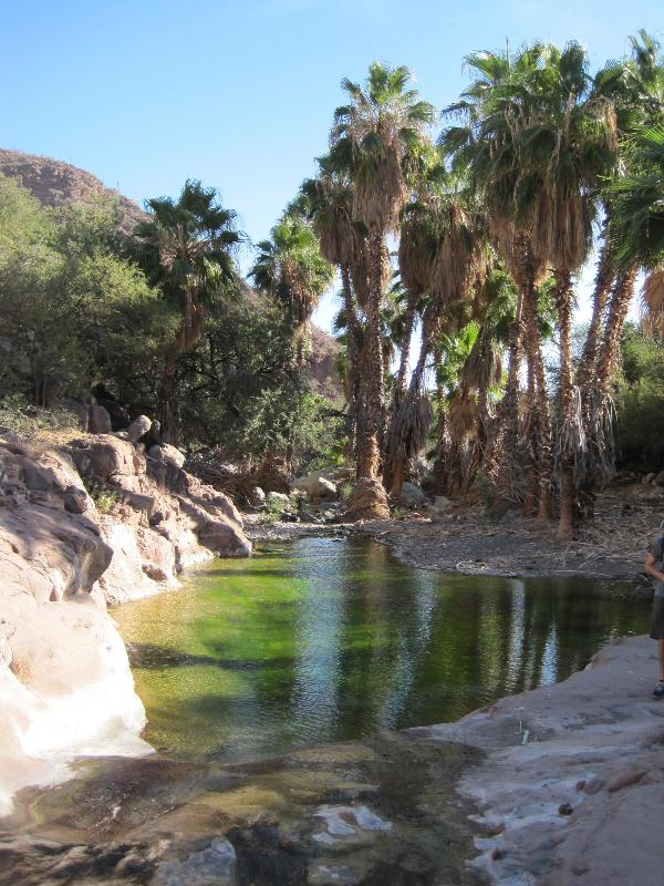 Hike the desert mountain oasis about 8 km up the San Javier Road just north of the airport on Rt. 1