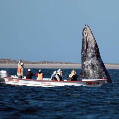 This is whale watching on steroids, actual guest photo!