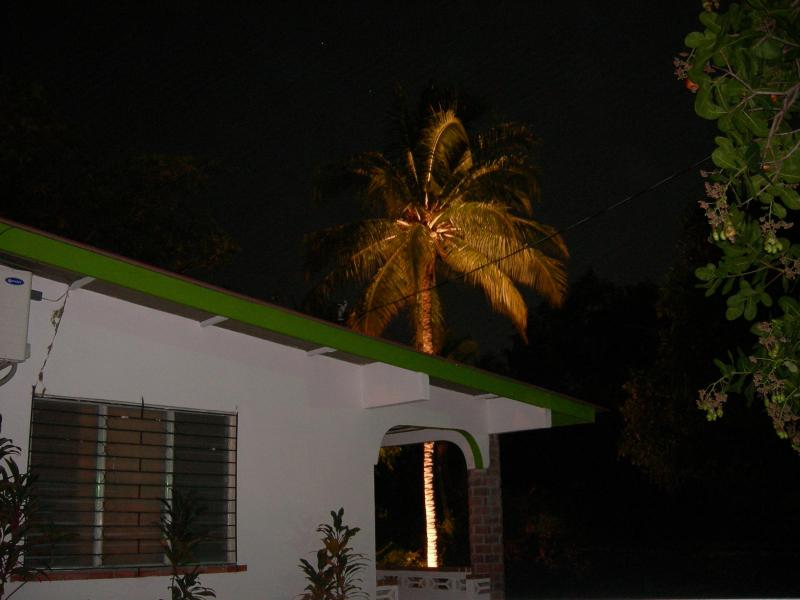 Our \'Corona\' Palm Tree (think of the Christmas time beer commercial w/ the palm tree that lights up)