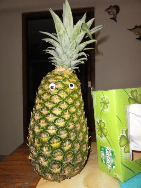 March 2011 - just an average sized pineapple...!!!