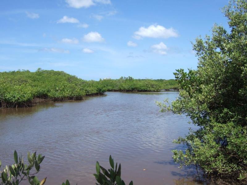 Estuary Mangrove