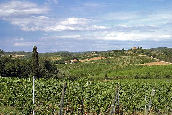 Two Chianti Farmhouses for Large Group on a Wine Estate - Casa del Grano and Fie, vacation rental in Barberino Val d'Elsa