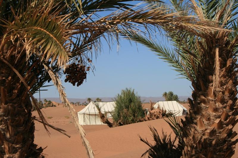 Looking through date palm trees to camp