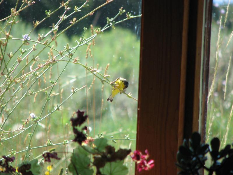 Sunroom Window