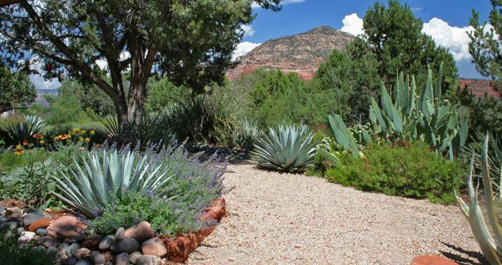 ..with lots of color, high-desert fragrance--and bees!--from February on into November