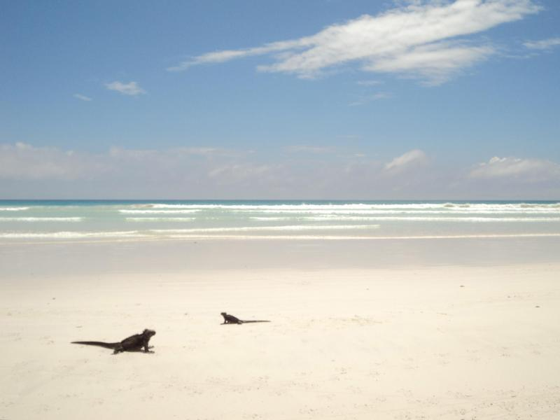 Tortuga Bay (30 min walk from the house along a path within national park)