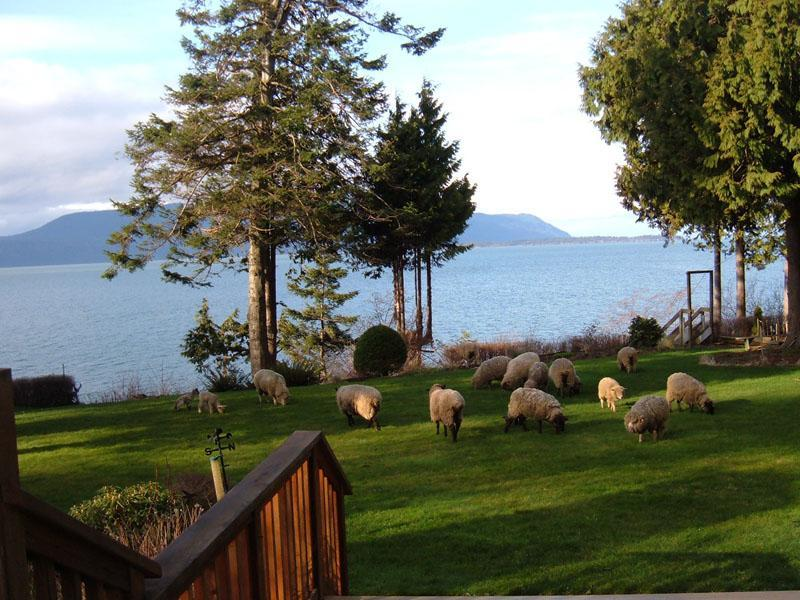 View from the front yard, with occasional visitors