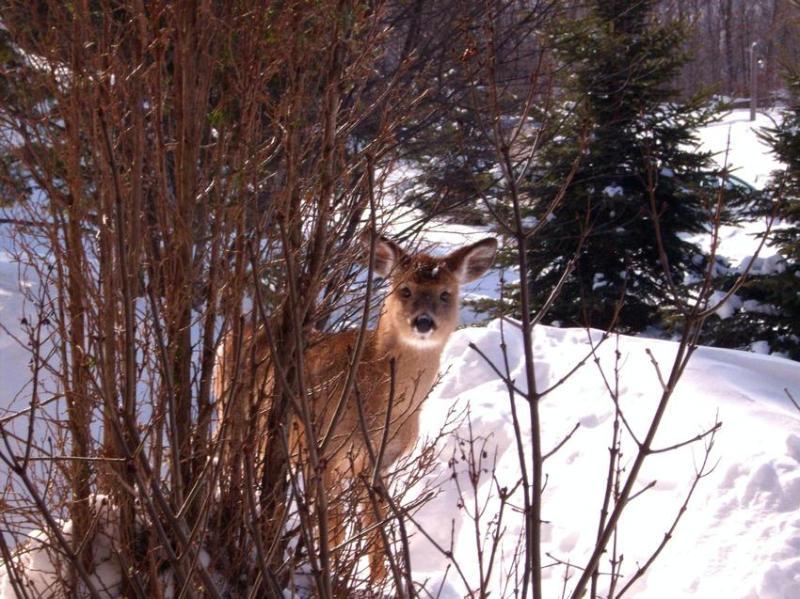 Vriendelijke bezoeker... Deze foto werd genomen vanaf de patio..