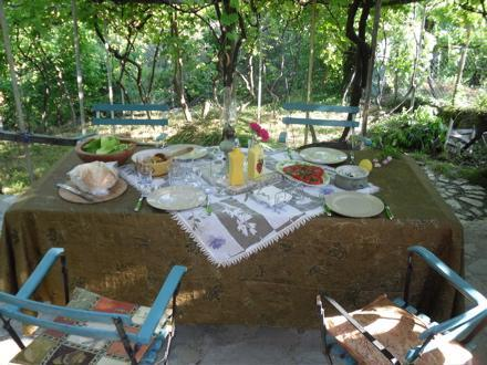 lunch under the vine
