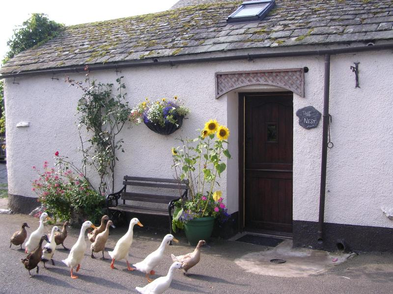Our Puddle Ducks passing The Nest cottage