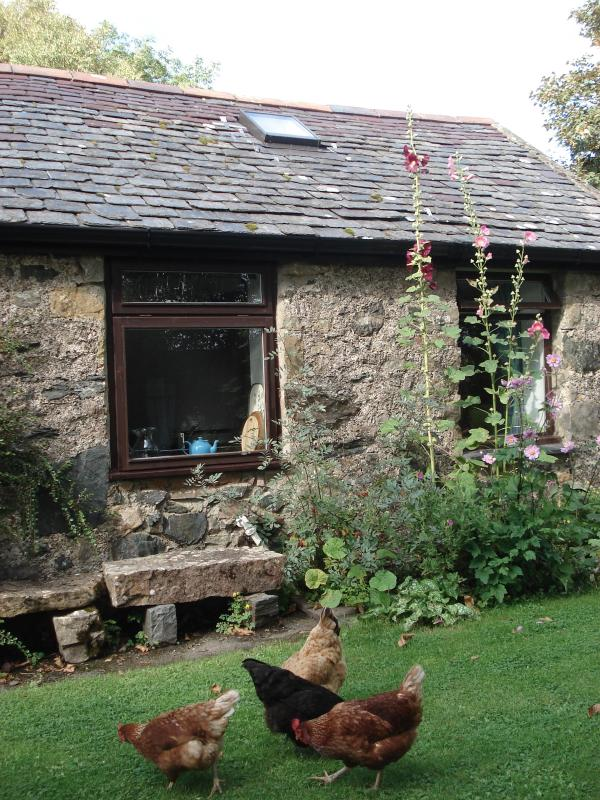 Stick Cottage and chickens