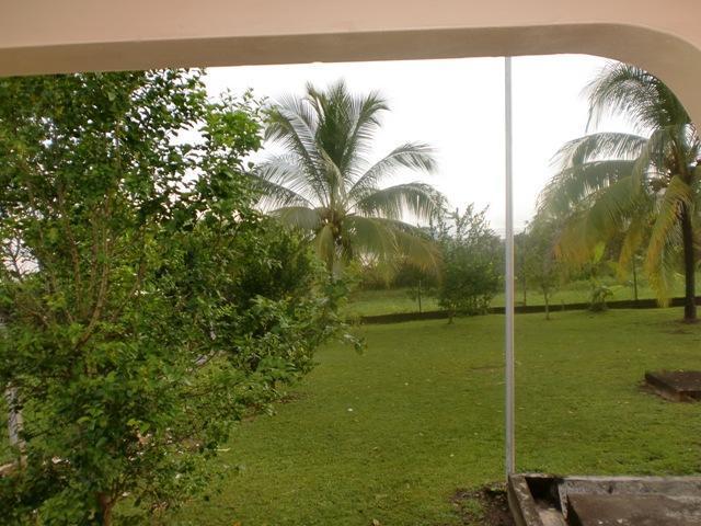Vista de patio con árboles de coco y frutas tropicales, así como vistas de agua grande
