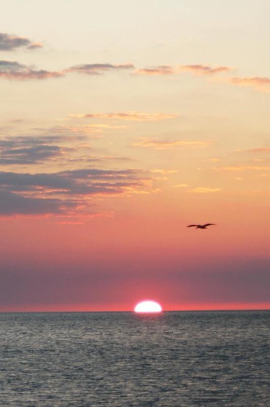 Couchers de soleil sont spéciaux sur Sanibel.  Vous aurez envie de planifier votre journée pour être sur la plage au coucher du soleil.