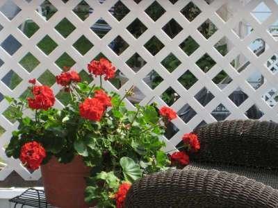 vous allez adorer les jardins et les fleurs