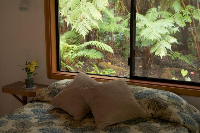 Rainforest Views from your bed